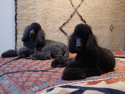 Pet Friendly Oriental Rugs